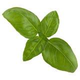 Green fresh basil isolated. Green fresh basil leaf isolated over white background Stock Images