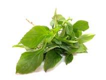 Green fresh basil leaves Royalty Free Stock Photography