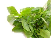 Green fresh basil leaves Stock Photography