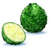 Green fresh bergamot fruit whole and slice, isolated, watercolor illustration Royalty Free Stock Images