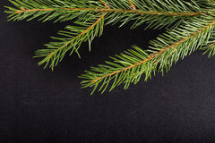 Green fresh branch of Cristmas tree on a black background. Bille Royalty Free Stock Photos