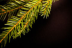 Green fresh branch of Cristmas tree on a black background. Bille Royalty Free Stock Images