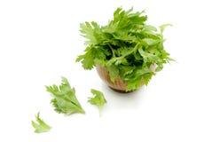 Green fresh celery. Stick isolated on white.  Stock Image