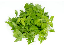 Green fresh celery. Stick isolated on white.  Royalty Free Stock Images