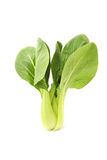 Green Fresh Chinese Cabbage or Bok Choy Royalty Free Stock Image