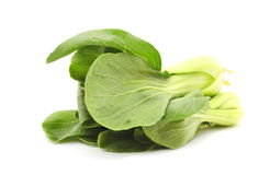 Green Fresh Chinese Cabbage or Bok Choy Stock Image