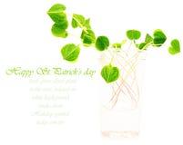 Green fresh clover Stock Photography