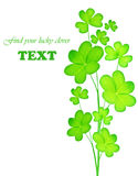 Green fresh clover Stock Photo
