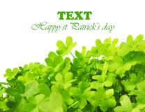 Green fresh clover border Stock Image
