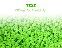 Green fresh clover border Royalty Free Stock Image