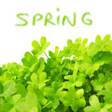 Green fresh clover border Royalty Free Stock Images