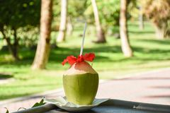 Green fresh coconut with straw and red flower served like cocktail drink in outdoor bar. Green fresh coconut with straw and red flower served like cocktail at Royalty Free Stock Photos