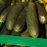 Green Fresh Cucumbers inside Wooden Box at Market. Green Fresh Cucumbers inside Wooden Box for sale at Market Stock Photo