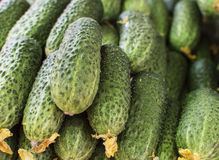Green fresh cucumbers piled together. Green fresh cucumbers  with yellow flowers piled together Royalty Free Stock Image