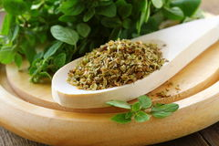 Green fresh and dry oregano royalty free stock image