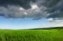 Green fresh field, Blue Dramatic  Sky Royalty Free Stock Photography
