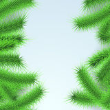 Green fresh Firtree branches layout Royalty Free Stock Photography