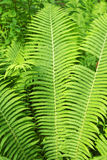 Green fresh forest fern background Stock Photo