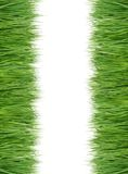 Green and fresh grass Royalty Free Stock Photos