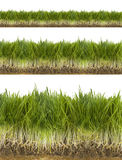 Green fresh grass Stock Photos
