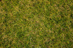 Green fresh grass background Royalty Free Stock Photos