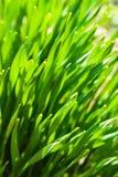 Green fresh grass royalty free stock photos