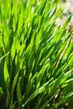 Green fresh grass stock photo