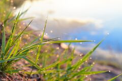 Free Green Fresh Grass Dew Drops Photo For Abstract Background. Selective Focus Macro Bokeh Stock Photography - 182563332
