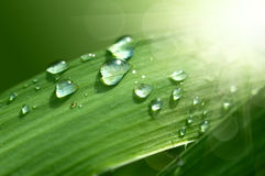 Green fresh grass with drop Stock Photos