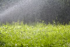 Green fresh grass with falling drops of morning rain water. Beautiful summer background with bokeh and blurred background. Low dep royalty free stock images