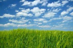 Green fresh grass Stock Images