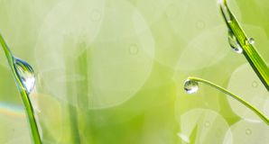 Free Green Fresh Grass In The Drops Of Dew Texture Stock Photo - 156692670