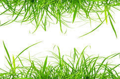 Green fresh grass isolated on the white background Royalty Free Stock Photography
