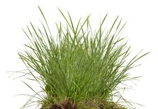 Green fresh grass meadow isolated. On white backgound stock photography