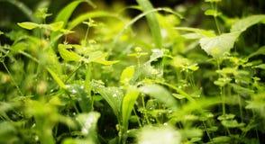 Green, fresh, grass, rain, nature royalty free stock image