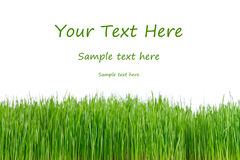 Green fresh grass with sample text Royalty Free Stock Photography