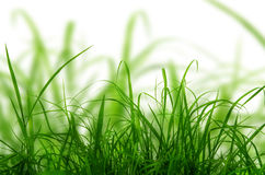 Green fresh grass  on the white background. Royalty Free Stock Photos