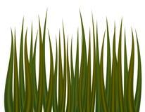 Green grass on white background. Green fresh grass on white background. Vector illustration Stock Image