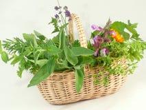 Green, fresh herbs. Many fresh and green garden herbs royalty free stock photo