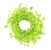 Green fresh herbs mix  , top view Stock Image