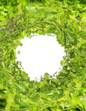 Green fresh herbs mix on white wooden background , top view Royalty Free Stock Image