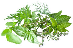 Green fresh herbs on a white. Royalty Free Stock Photo