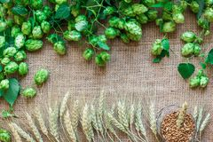 Green Fresh Hops with Wheat as copy space frame text area on sackcloth background. Flat lay. Still life. Top view Royalty Free Stock Photography