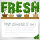 Green fresh houseplant vector mock up. vector illustration