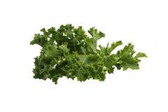 Green Fresh Kale Leaf Isolated On White Background Stock Photos