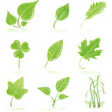Green Fresh Leaf Stock Images