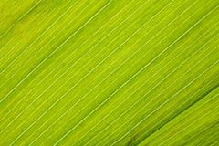 Green fresh leaf closeup background Stock Photo