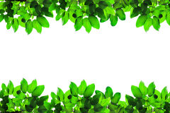 Green fresh leaf frame Stock Photography