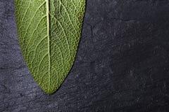 Green fresh leaf of sage. On dark stoun background. top view. close up Stock Photos