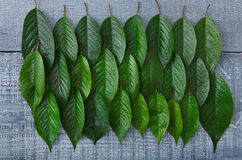 Green fresh leaves of cherry tree pattern background Royalty Free Stock Images